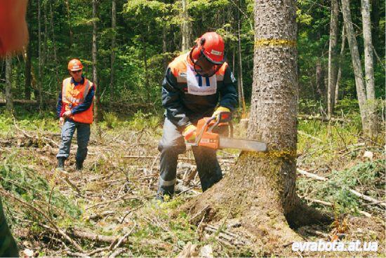 Требуется работник в Польшу по вырубке деревьев, уборка территории - Работа в Польше