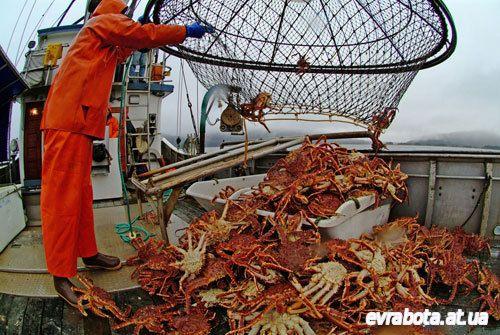 На вылов крабов в Норвегию требуется рыбак электрик моторист - Вакансии для моряков работа