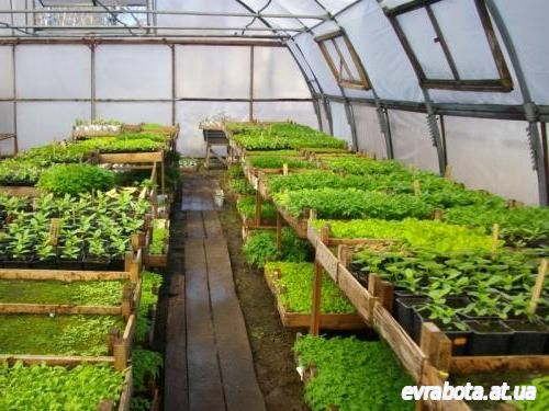 Трудоустройство в Финляндии для мужчин и женщин 2016, 2017 на выращивание овощей - Работа в Финляндии